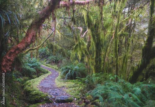 las-tropikalny-w-nowej-zelandii