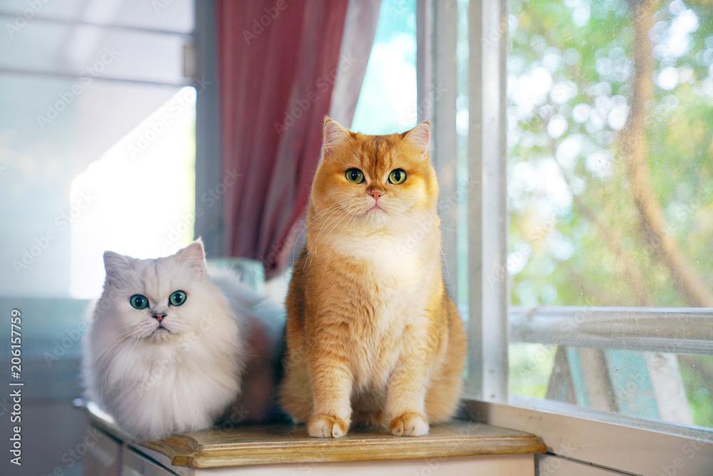 Fototapeta Two cats are lovers. - obraz na płótnie