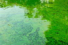 Green Water Pond Tropical Lake...