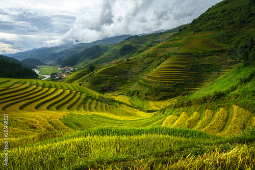 Foto auf Gartenposter Reisfelder Terraced rice field in harvest season in Mu Cang Chai, Vietnam.
