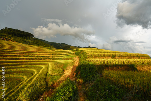 Papiers peints Vignoble Terraced rice field in harvest season in Mu Cang Chai, Vietnam.