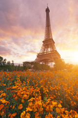 Fototapeta Sunset at Eiffel tower in Paris, France with flowers in the foreground