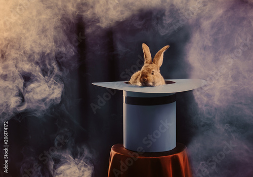 rabbit in  hat on blue background