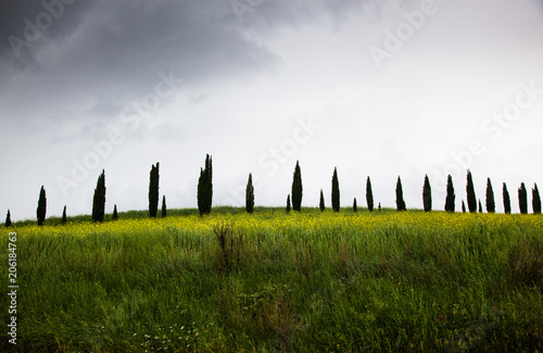 Fotobehang Wit row of cypress trees at sunset - iconic tuscan landscape