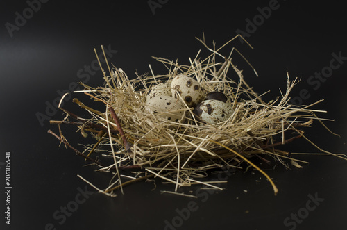 quail eggs in a nest isolated on black background
