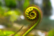 Nature Details Of Fern And Fibonacci Series