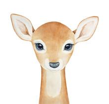 Baby Deer Character. Hand Draw...