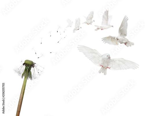 iluzja-optyczna-dmuchawiec-zmieniajacy-sie-w-ptaki
