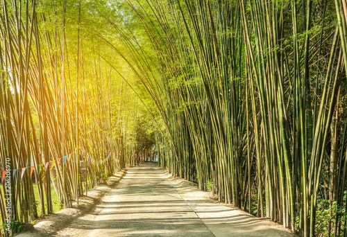 Poster Bambou road with green bamboo forest curve natural tunnel cave
