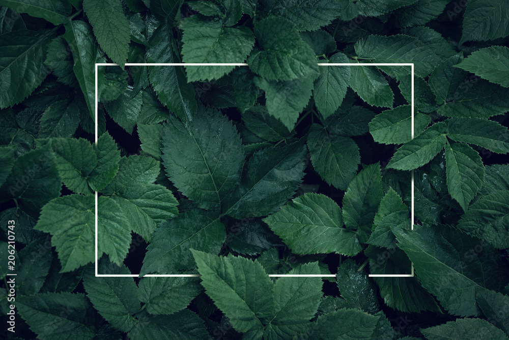 Fototapety, obrazy: Nature background, abstract white frame in the leaves with copy space