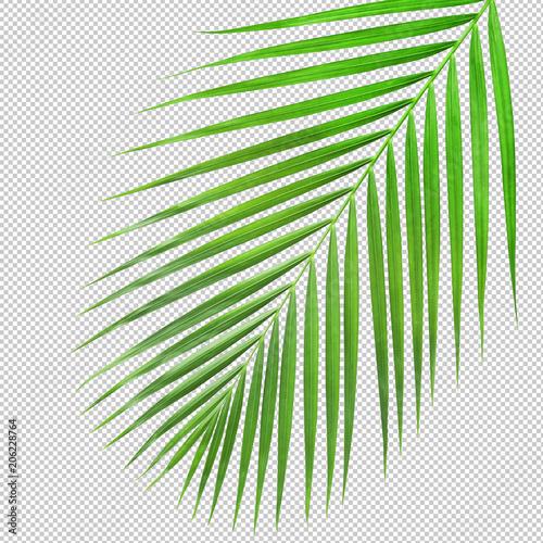 Αφίσα  Palm leaf texture di cut.clipping path