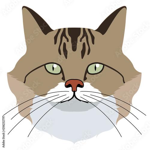 Wall Murals Cats Avatar of a cat. Cat breeds