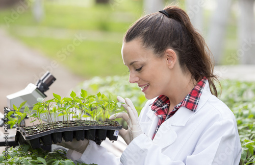 Fototapeta Woman agronomist holding seedling tray in greenhouse obraz