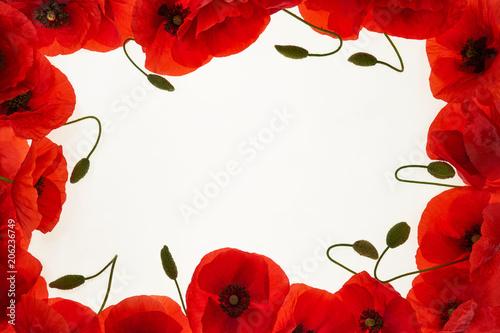 Fototapeta Czerwone maki na białym tle, rama obraz