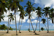 The Rincon beach wild and hard to reach on the Samana peninsula in Dominican Republic