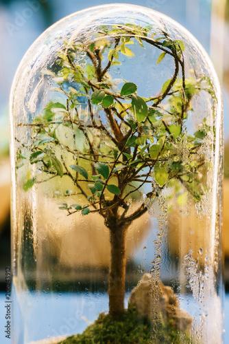 Decorative Bonsai Tree Inside Glass Terrarium
