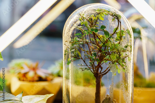 Decorative Bonsai Tree Inside Glass Terrarium