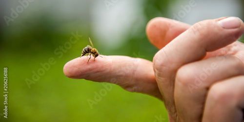 Spoed Foto op Canvas Bee the bee stings the person in the finger