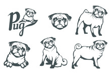 Pug Dog Set. Head Of An Pug. P...