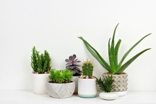 Group Of Various Indoor Cacti And Succulent Plants In Pots. Side View On White Shelf Against A White Wall.