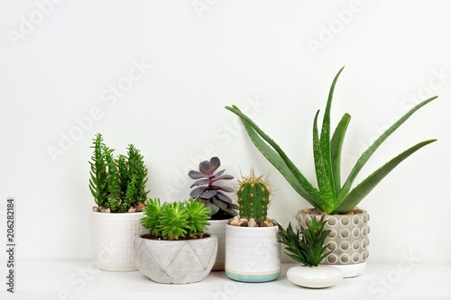 Stampa su Tela  Group of various indoor cacti and succulent plants in pots