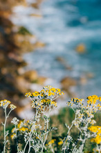 Weeds And Flowers With The Blurred Ocean As A Backdrop.