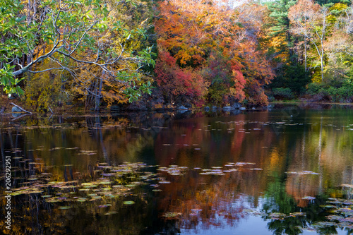 Fototapeten New York Fall Colors Reflected into a Pond