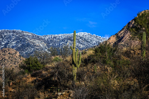 Fotografía  A view from the Sonoran Desert to the snowy Santa Catalina mountains above