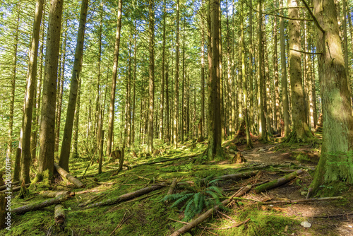 Deurstickers Berkbosje sunny day in a dense, green, subtropical forest, with mossy trees, ferns