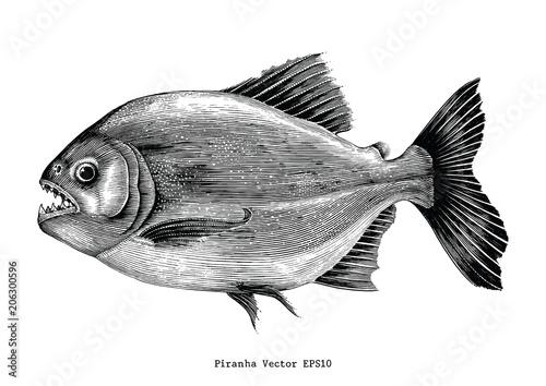 Obraz na plátně Piranha hand drawing vintage engraving illustration