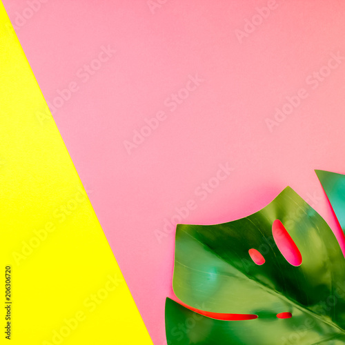 Fotografiet  Tropical jungle monstera leaf on bright background