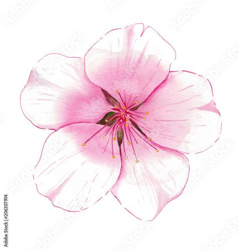 Photo  Watercolor Almond Blossom
