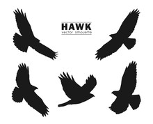 Vector Illustration: Set Of Silhouettes Of Flying Hawk Isolated On White Background. Black Eagles.