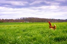 Chicken On Patrol