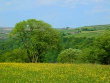 Vibrant Spring Meadow With Yel...