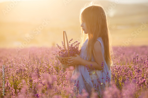 Photo  A little girl with a basket in a lavender field