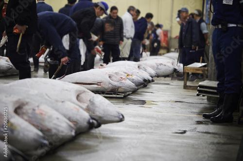 Vászonkép Tsukiji fish market