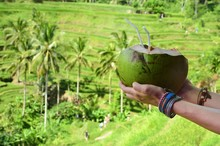 Woman With Coconut In Tegalal...