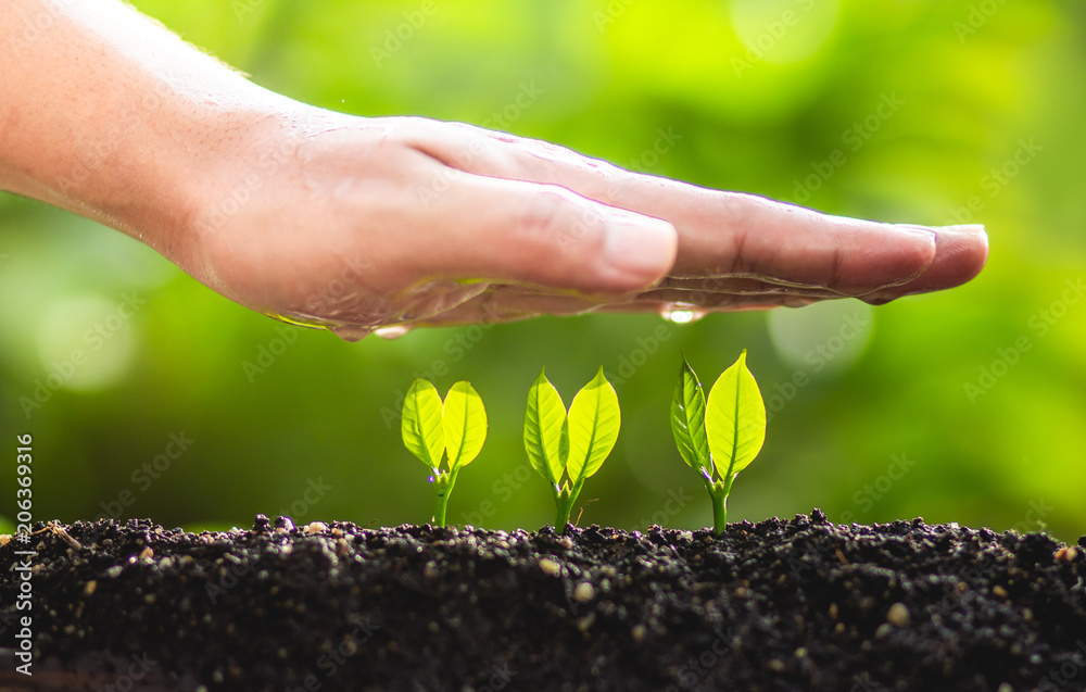Young plant tree in nature save world concept