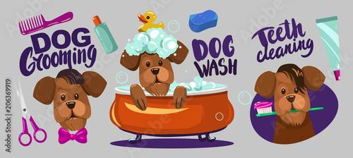 Fotografía  Dog grooming. Set of vector cartoon objects.