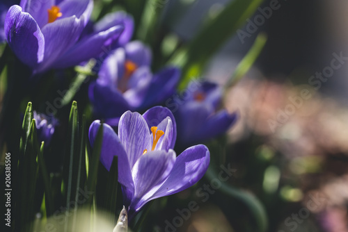 Close-up of purple flowers growing at garden