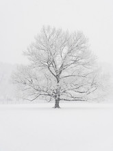 Bare Tree On Snow Covered Field During Snowfall