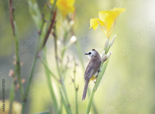 Foto op Canvas Vogel Close-up of bird perching on plant
