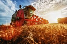 Combine Harvest In The Golden ...