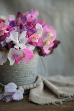 Photograph Of A Galvanized Bucket Filled With Sweet Peas