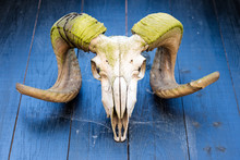 Muffa Horns With A Skull Suspended On A Wooden House Wall. Arms Of A Horned Game Hanging Above The Entrance Of An Old House.