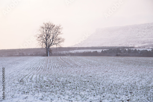 Fotobehang Wit Snowy landscape in Soria Spain