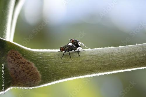 Photo  Moscas cruzando em galho de árvore embauba