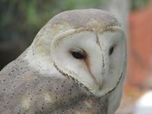 FLORIDA OWL