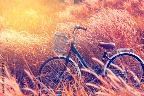 Aluminium Prints Bicycle Vintage Bicycle in Summer Meadow made with color Vintage Tone,Filtered effect